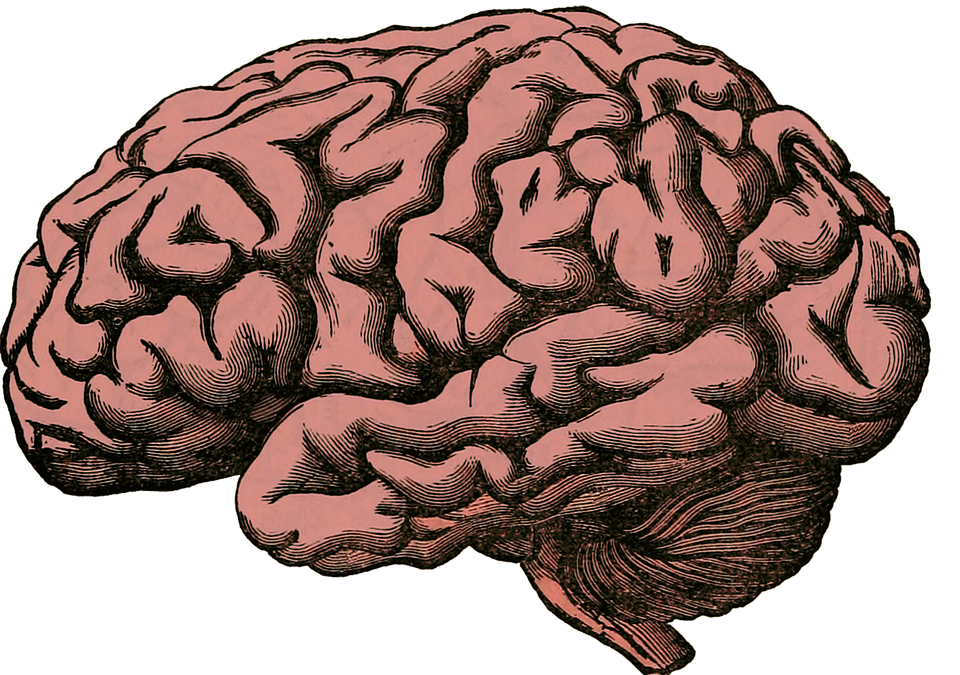 What is a Pineal Gland?